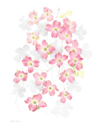 Cornus Blossom clipart #12, Download drawings
