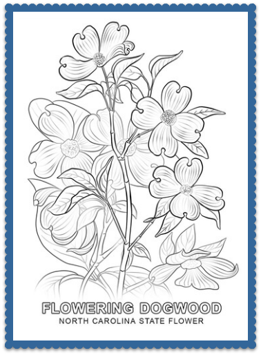 Cornus Blossom coloring #15, Download drawings
