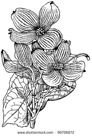 Cornus Blossom coloring #10, Download drawings