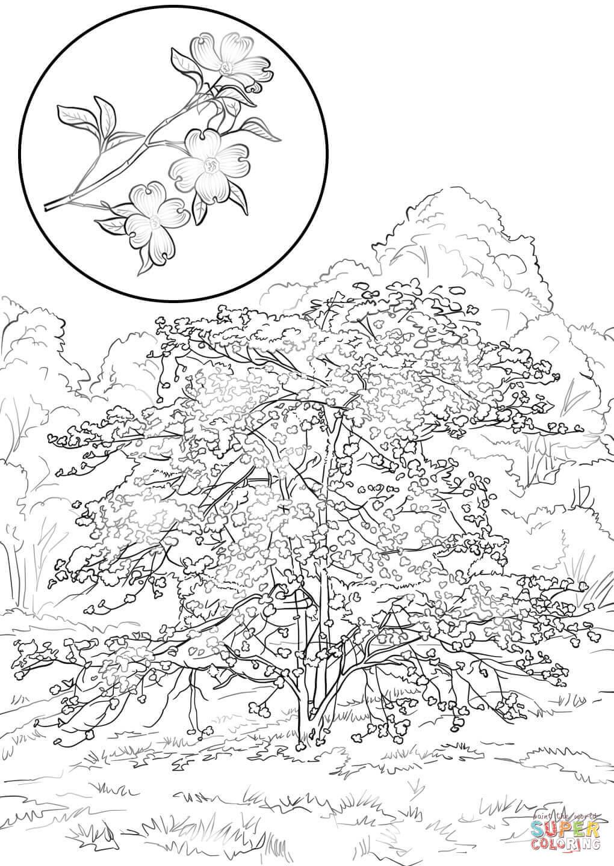 Cornus Blossom coloring #5, Download drawings