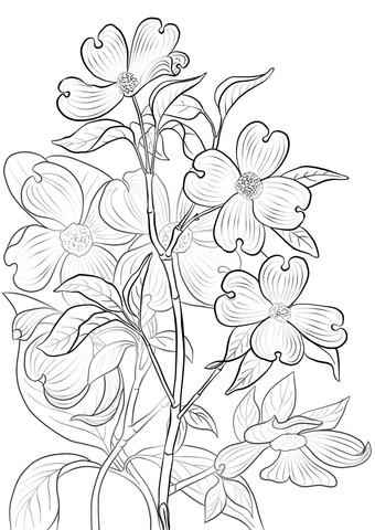 Dogwood coloring #6, Download drawings