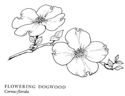 Cornus Blossom svg #13, Download drawings