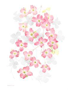 Cornus Blossom svg #1, Download drawings
