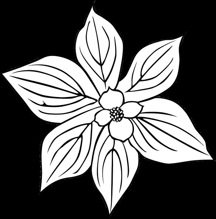 Cornus Blossom svg #5, Download drawings