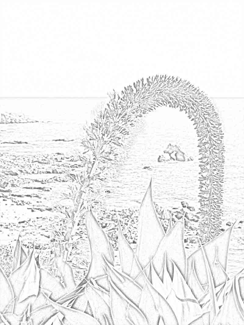 Corona Del Mar coloring #12, Download drawings
