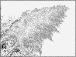 Cortaderia Selloana coloring #10, Download drawings