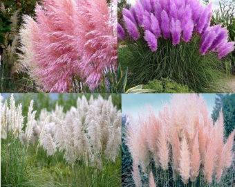 Pampas Grass svg #9, Download drawings