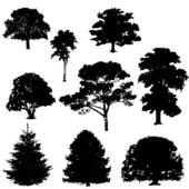Cottonwood Trees clipart #12, Download drawings