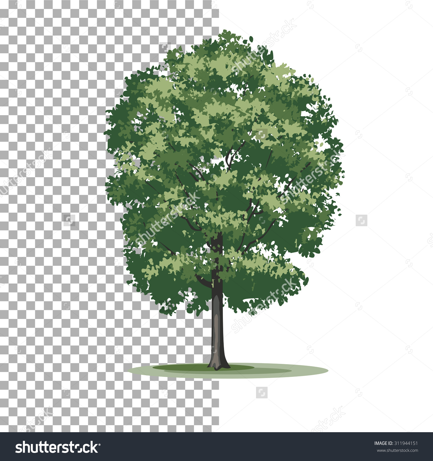 Cottonwood Trees clipart #17, Download drawings