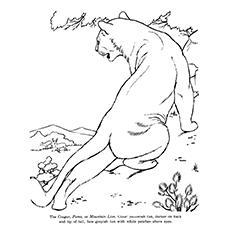 Cougar coloring #16, Download drawings