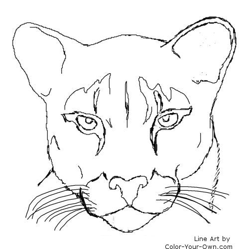 Cougar coloring #18, Download drawings