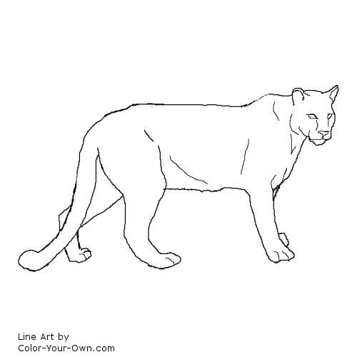 Cougar coloring #19, Download drawings