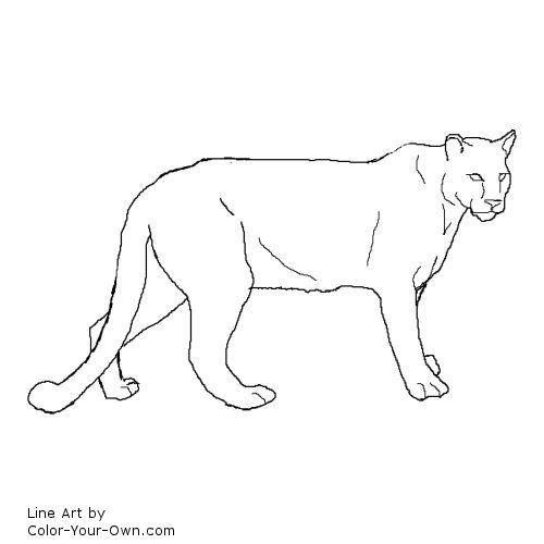 Cougar coloring #19, Download drawings