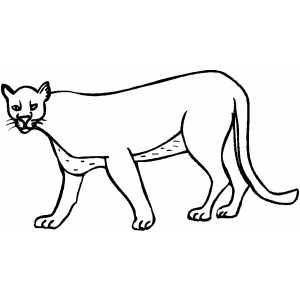 Cougar coloring #13, Download drawings