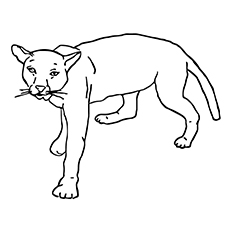 Cougar coloring #2, Download drawings