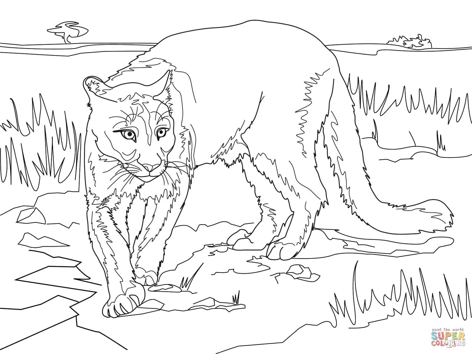 Cougar coloring #9, Download drawings