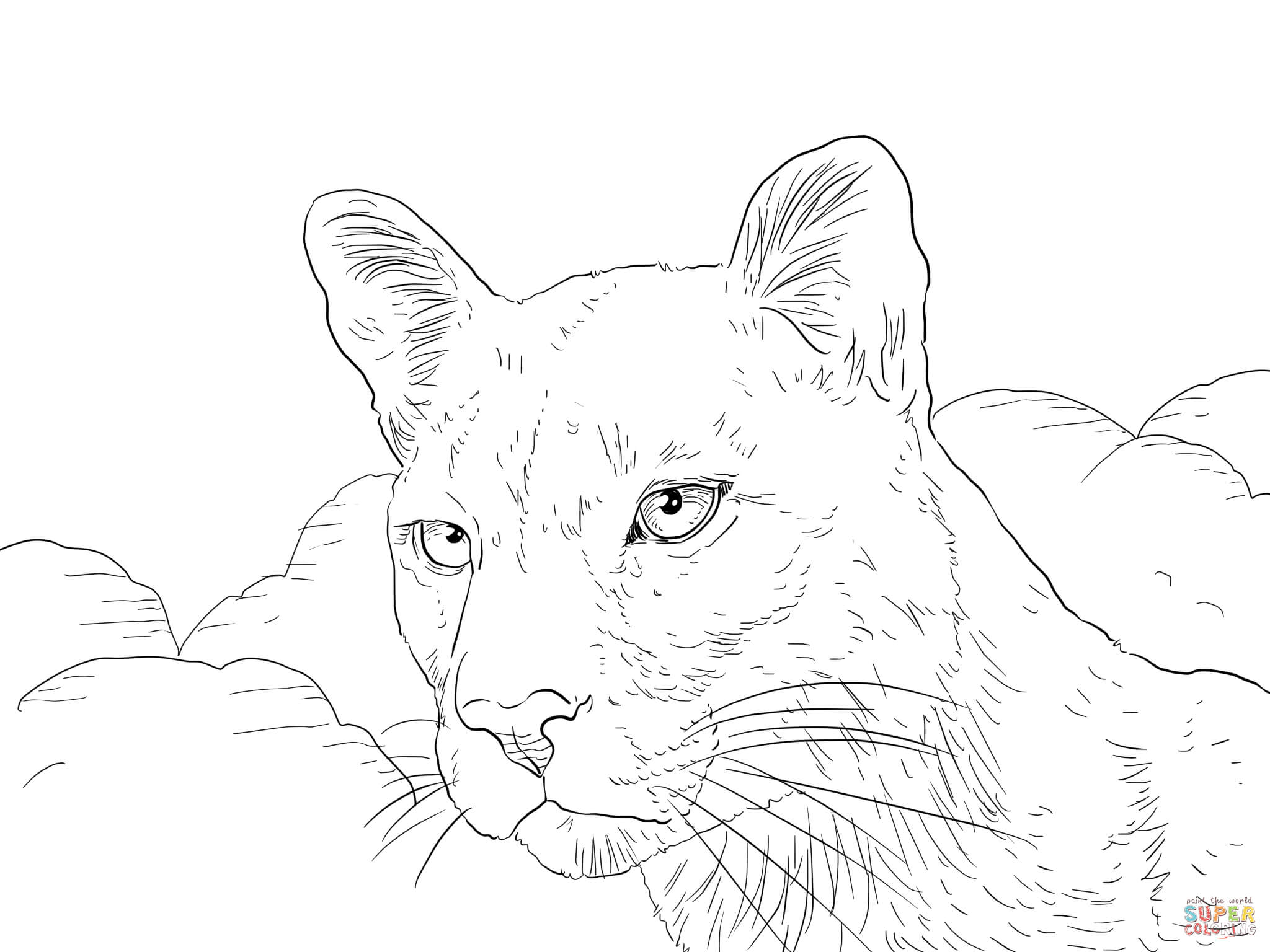 Cougar coloring #3, Download drawings