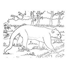 Cougar coloring #15, Download drawings