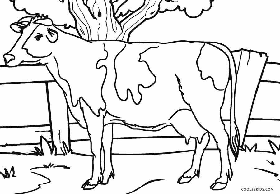 Cow coloring #3, Download drawings