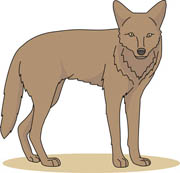 Coyote clipart #17, Download drawings