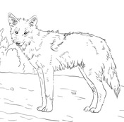 Coyote coloring #13, Download drawings
