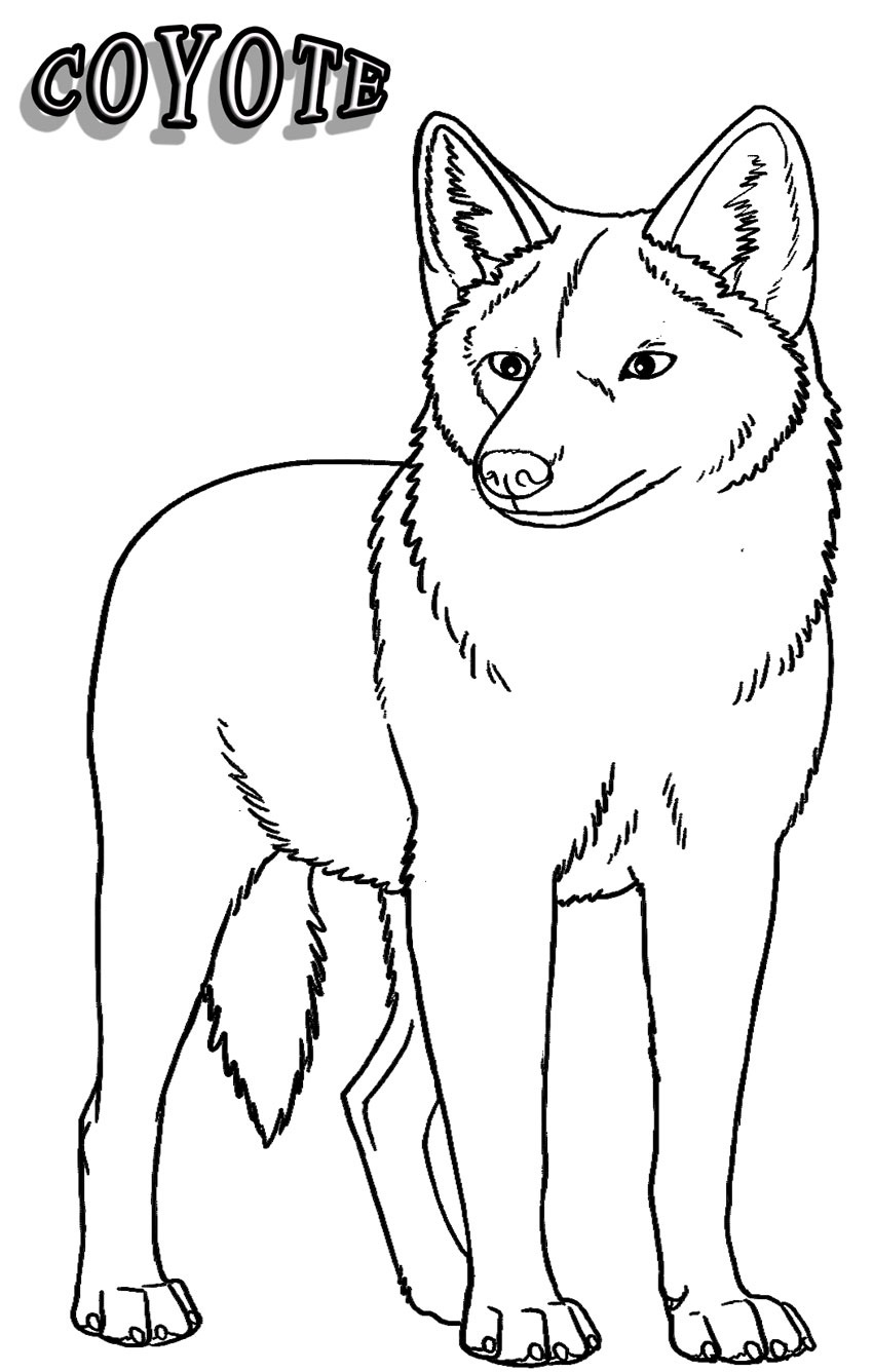 Coyote coloring #14, Download drawings