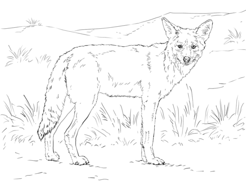 Coyote coloring #7, Download drawings