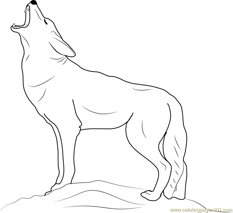 Coyote coloring #11, Download drawings