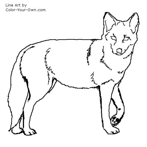 Coyote coloring #15, Download drawings