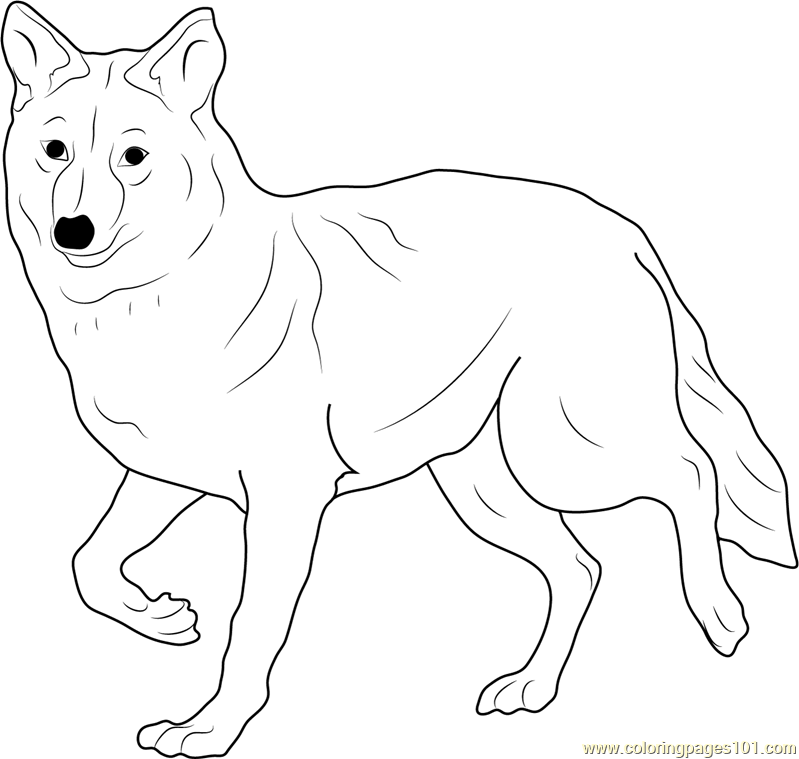 Coyote coloring #6, Download drawings