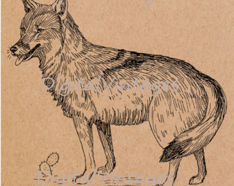 Coyote svg #12, Download drawings