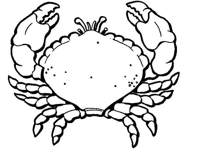 Crab coloring #2, Download drawings
