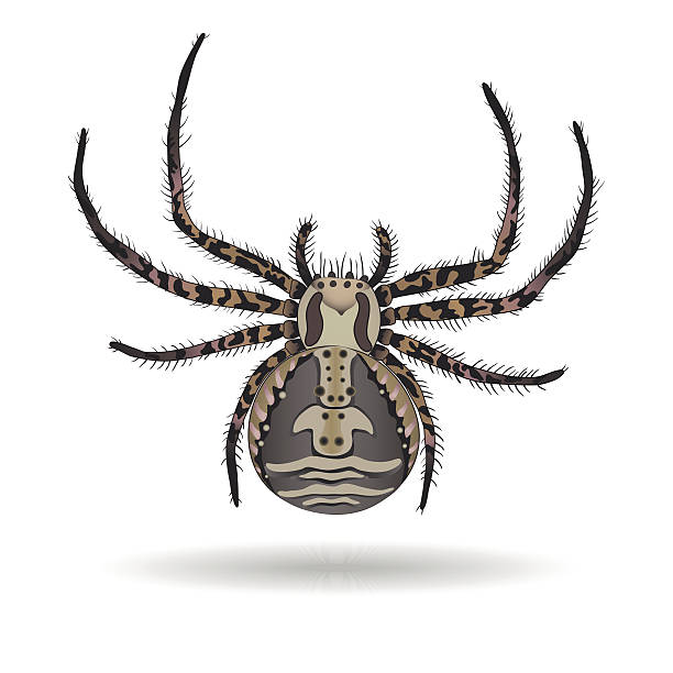 Crab Spider clipart #10, Download drawings