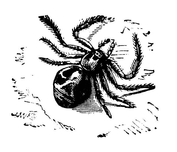 Crab Spider clipart #8, Download drawings