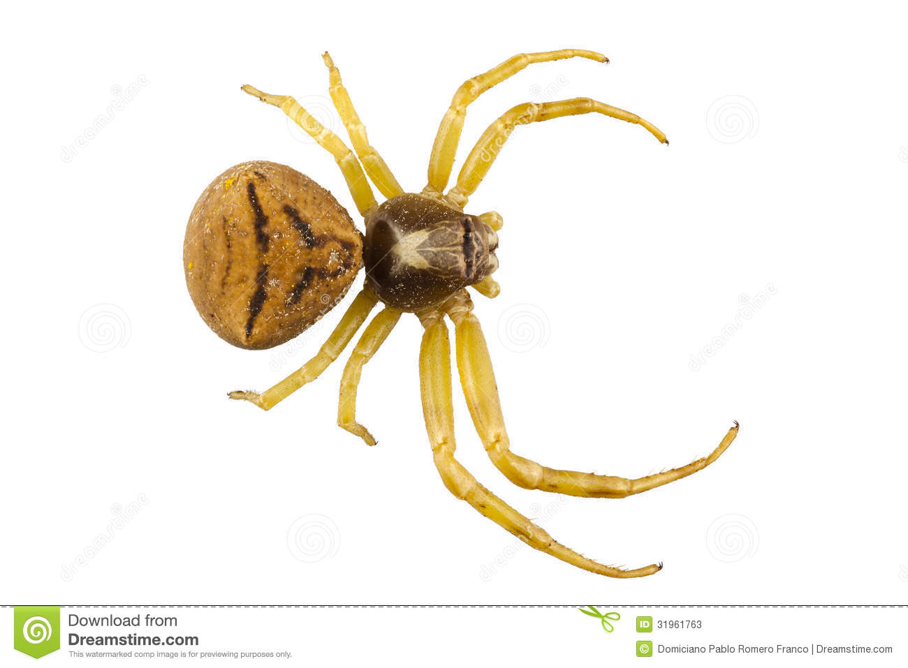 Crab Spider clipart #17, Download drawings