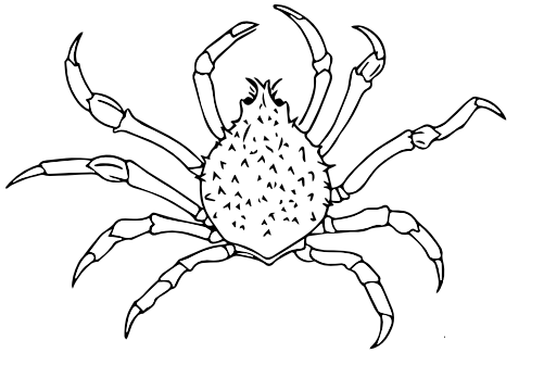 Crab Spider coloring #11, Download drawings