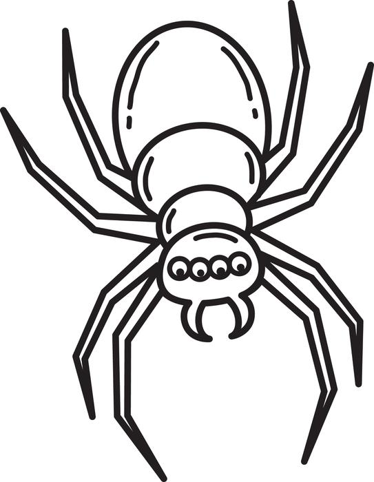 Crab Spider coloring #9, Download drawings