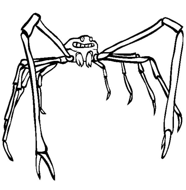 Crab Spider coloring #4, Download drawings