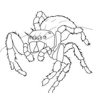 Crab Spider coloring #18, Download drawings