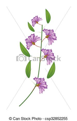Crape Myrtle clipart #8, Download drawings