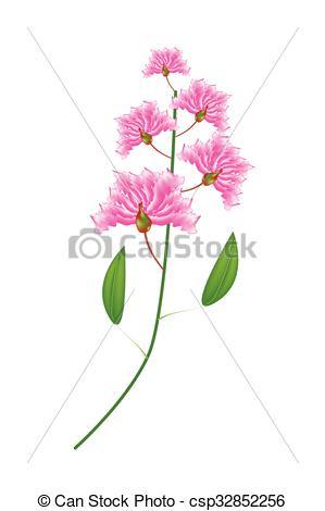 Crape Myrtle clipart #18, Download drawings