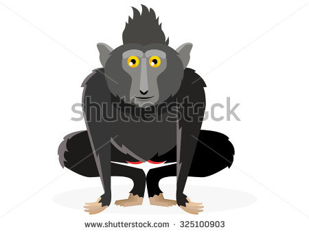 Crested Black Macaque coloring #19, Download drawings