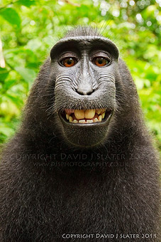 Crested Black Macaque svg #11, Download drawings