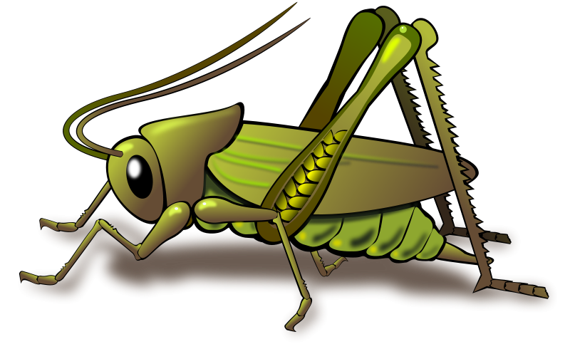Cricket clipart #4, Download drawings