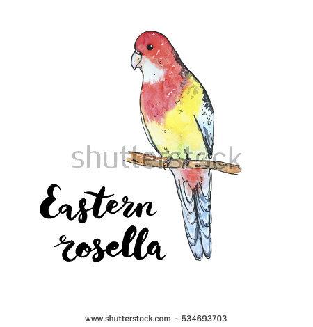 Crimson Rosella coloring #10, Download drawings
