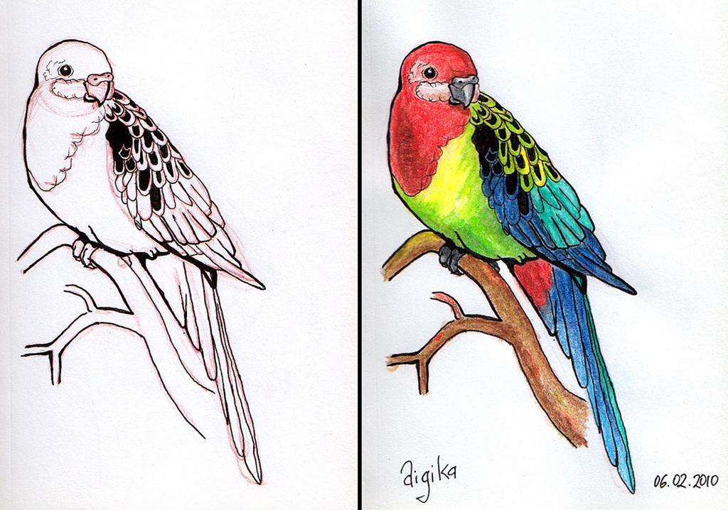 Crimson Rosella coloring #18, Download drawings
