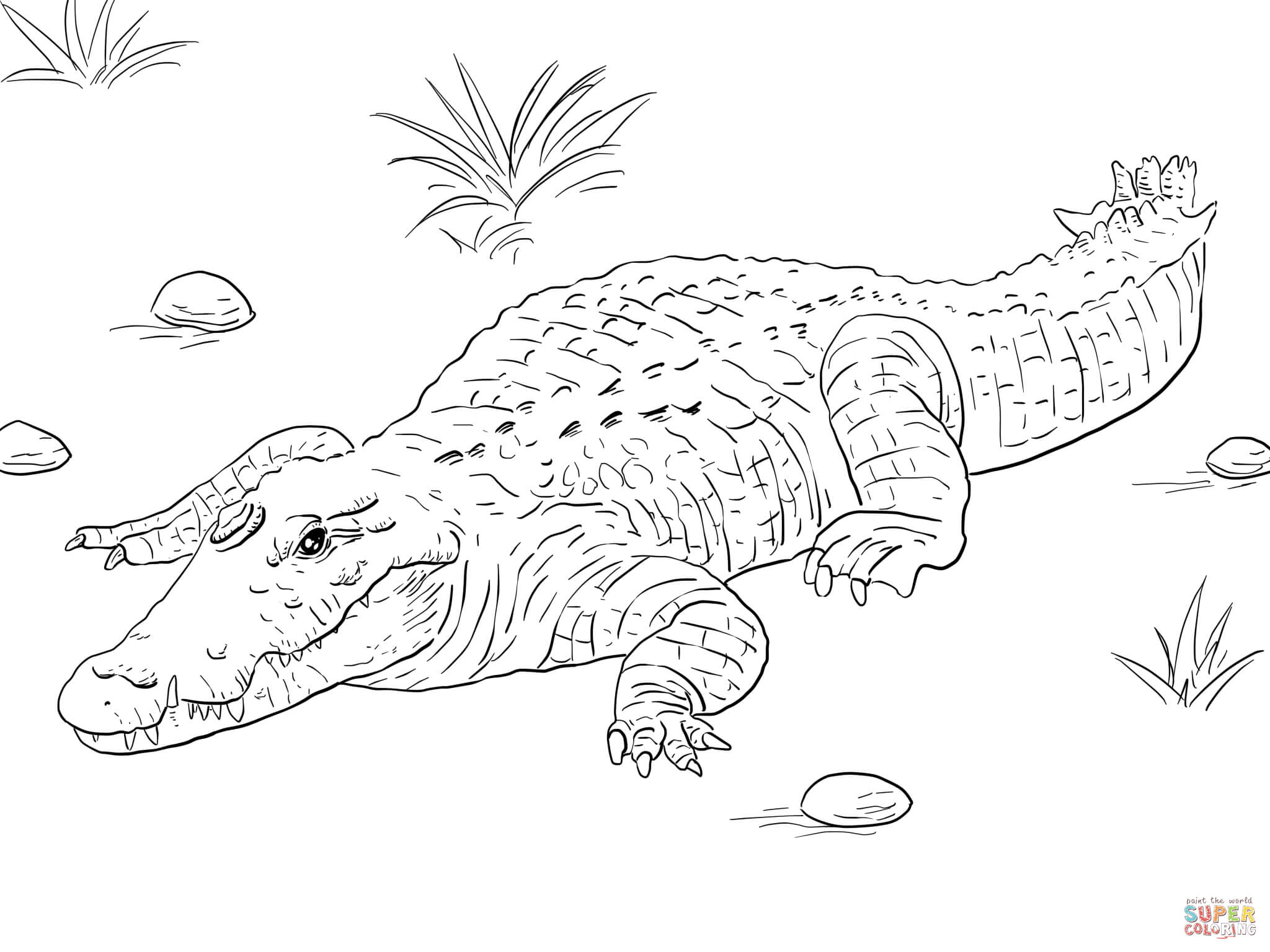 Crocodile coloring #17, Download drawings