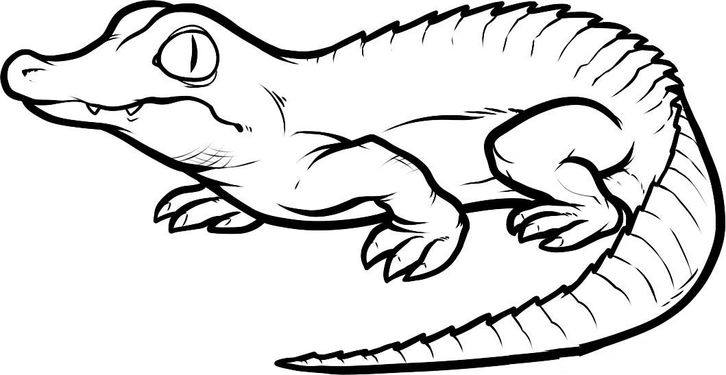 Crocodile coloring #1, Download drawings