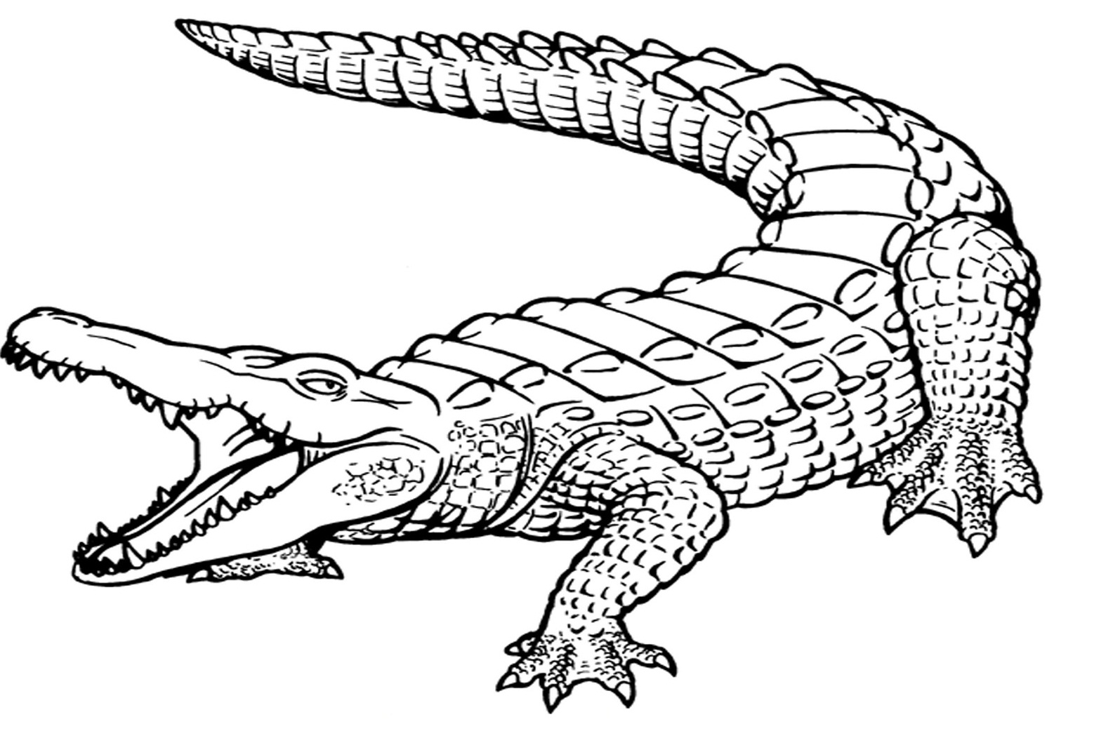 Crocodile coloring #15, Download drawings