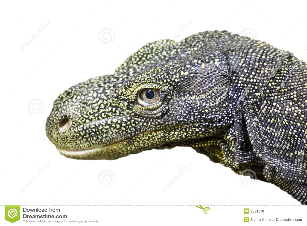 Crocodile Monitor clipart #18, Download drawings